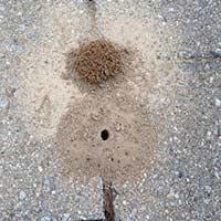 RI Digger Wasp Elimination