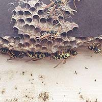 Wasp Inspection in Rhode island
