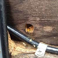 Carpenter Bee Control in RI