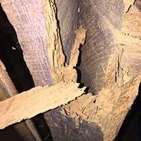 Powder Post Beetle Control in RI