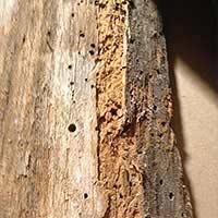 Powder Post Beetle Elimination in Rhode Island