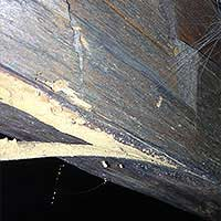 Powder Post Beetle Elimination in RI