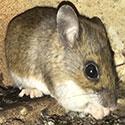 RI Mouse Control