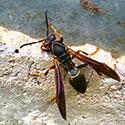 RI Wasp Control