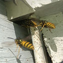 RI Yellow Jacket Control