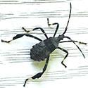 RI Seasonal Pest Control