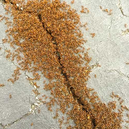 Ant Colony Image
