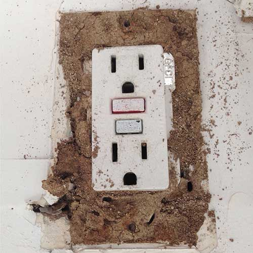 Termite Colony in electrical