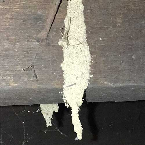 Termites in hanging tube