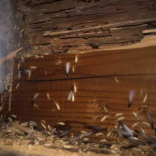 Termite nest with all stages image