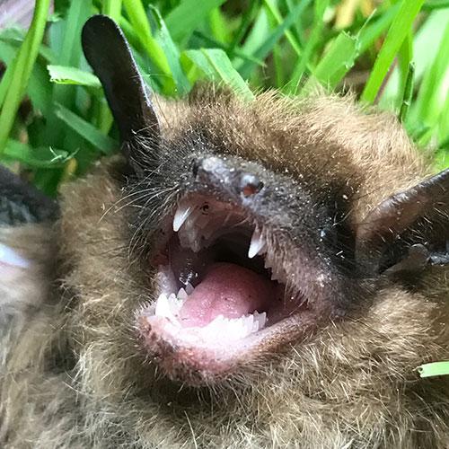 Bat up close image