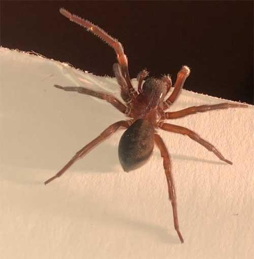 arachnid image