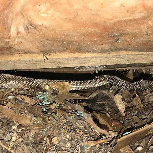 Snake skin after shedding
