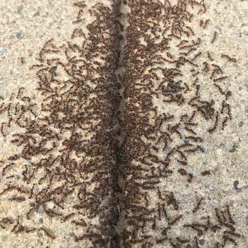Ant picture