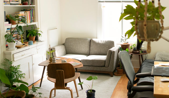 How to Keep Indoor Houseplants Healthy
