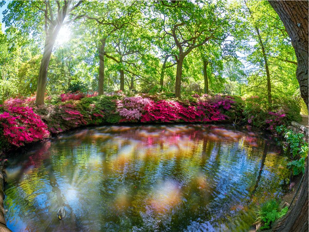Isabella Plantation - Richmond Park