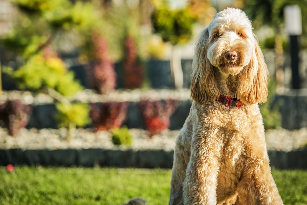 Backyard Pet Safety