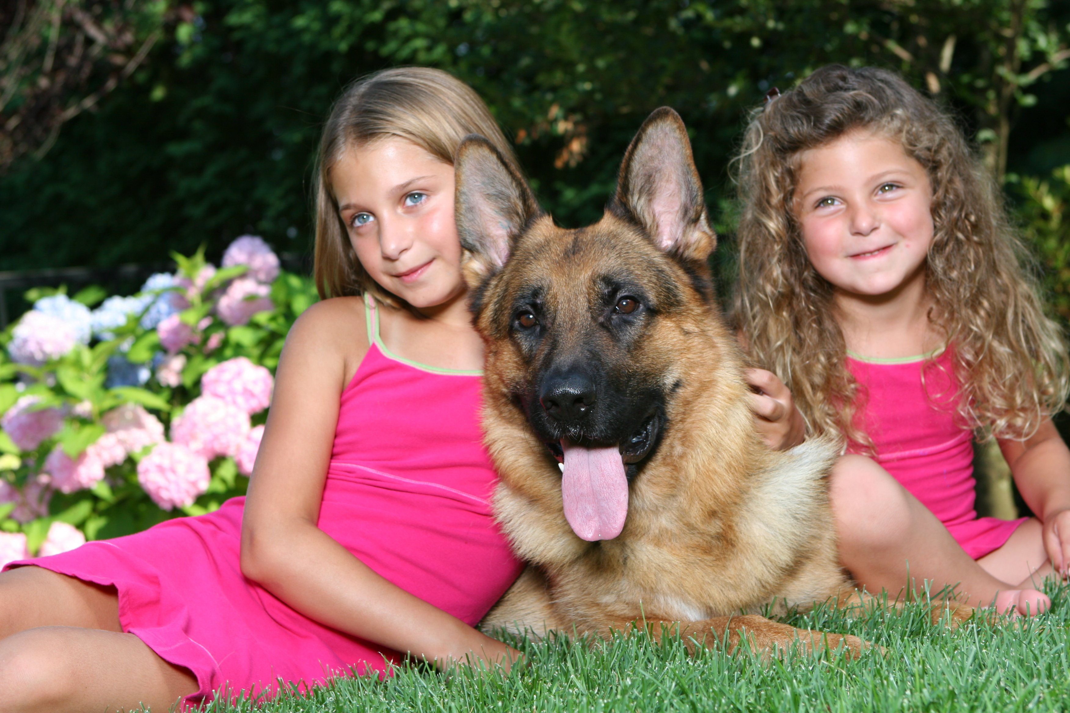 Canine Protection International | Dogs by CPI