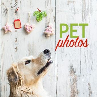 "Photo of a golden retriever and the text ""pet photos"""