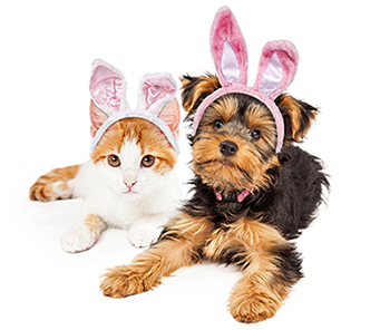 a small brown and black dog and a brown and white cat wearing bunny ears
