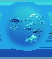 Wetfish website graphic