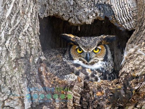 Image of owl inside a tree knot