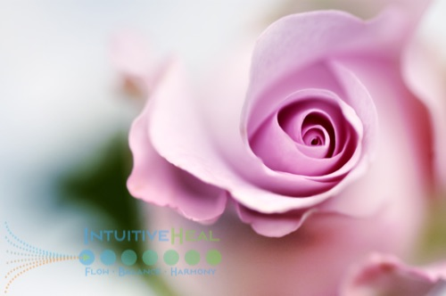 Photo of pink rose