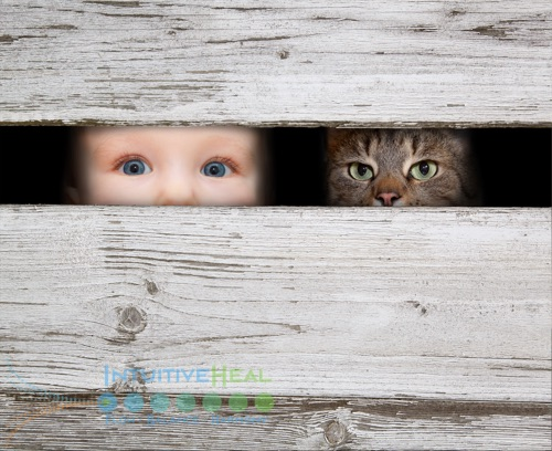 Photo of a child and a cat peeking through a fence