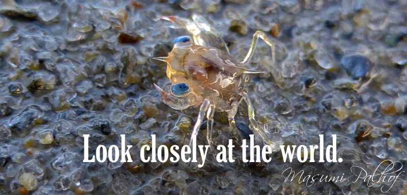 small clear crab