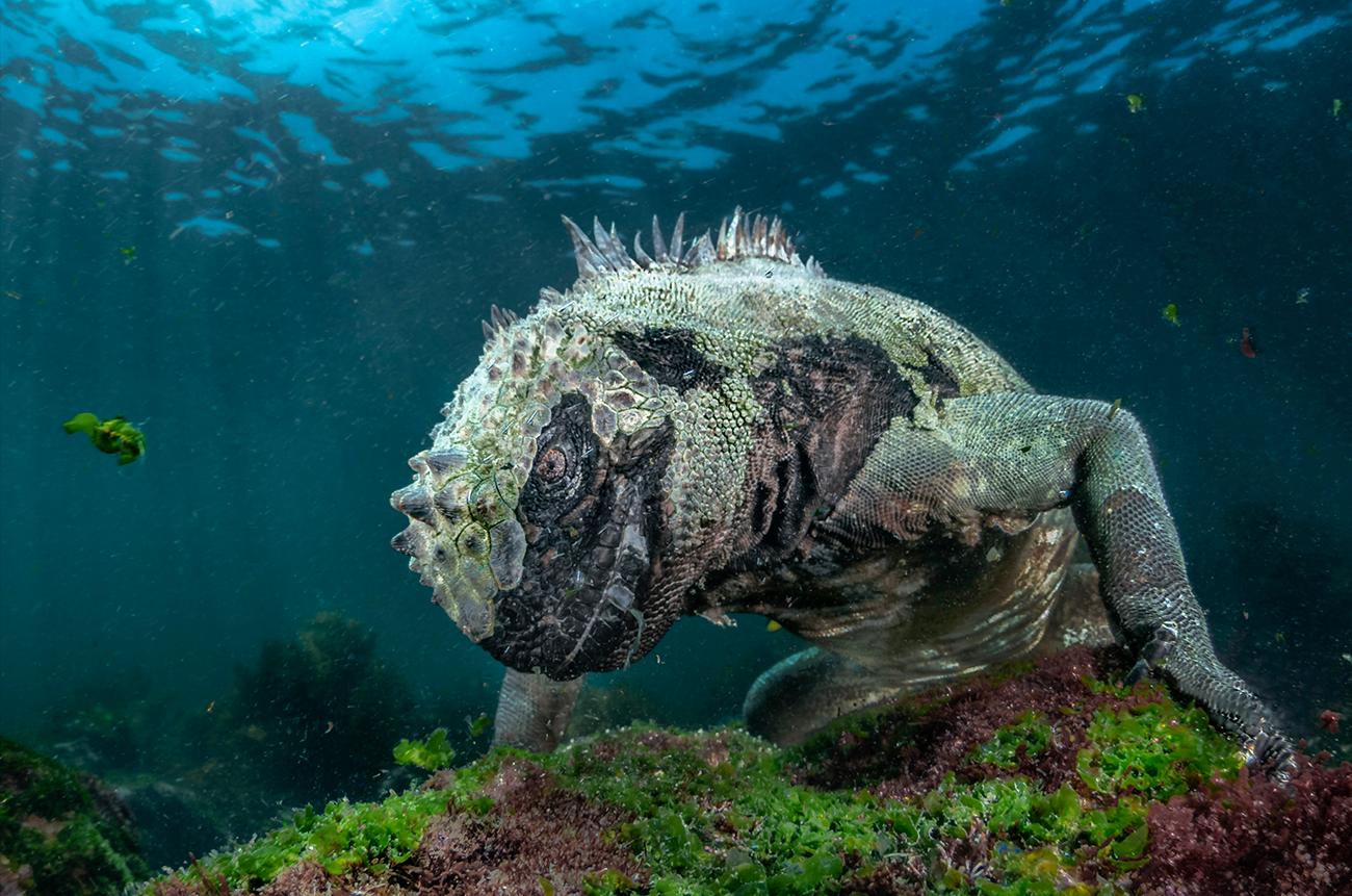 Camouflage Rhino
