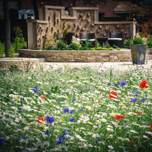 Natural Pond Wild Flowers