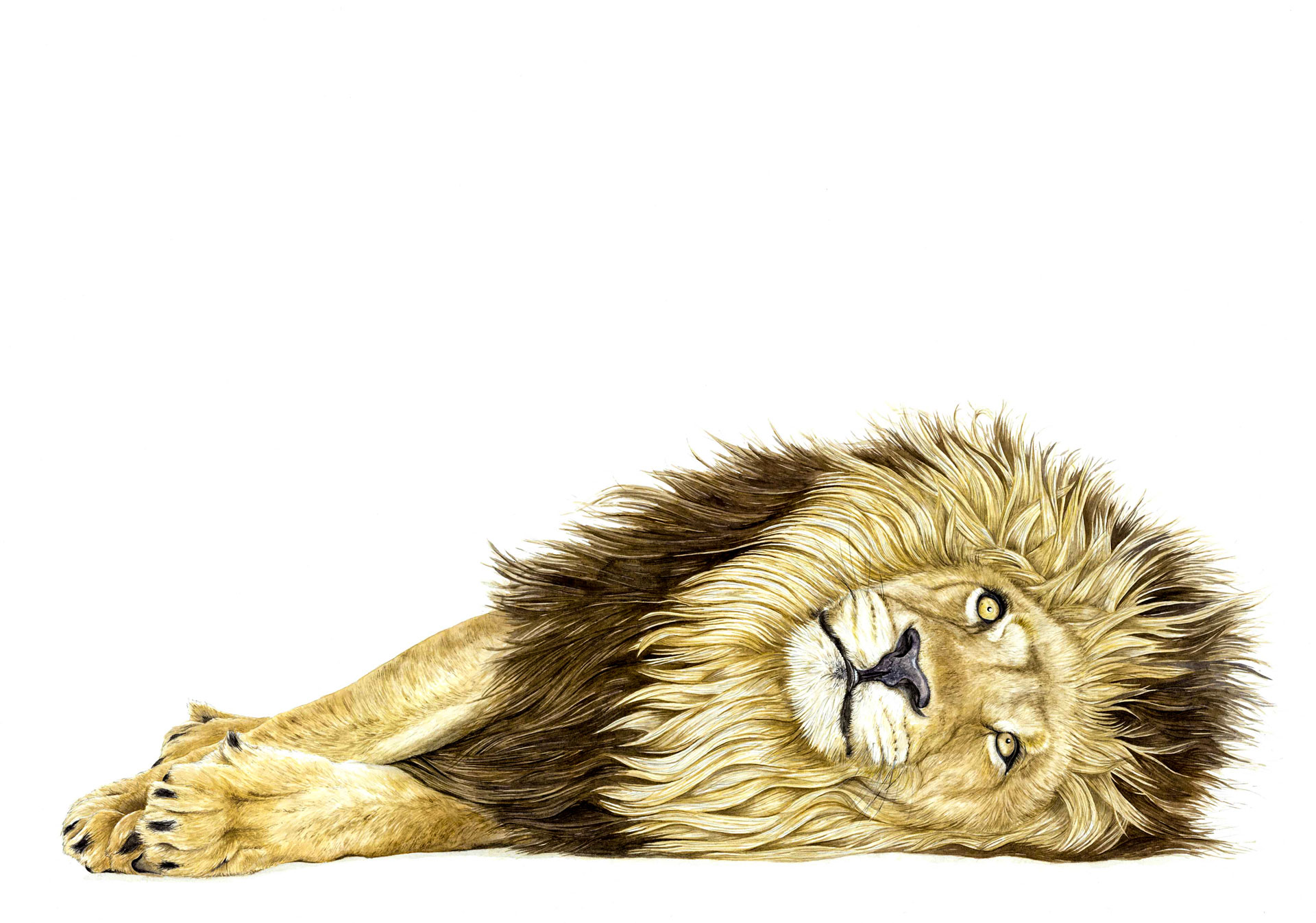 Watecolour Lion