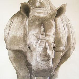 Water Colour Rhino