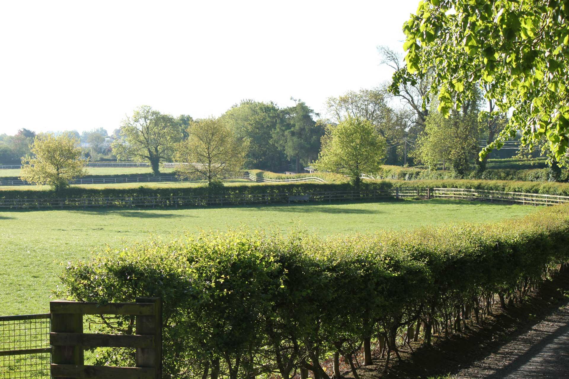 Oak Tree Farm & Bloodstock | Spring Morning