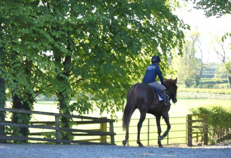 Oak Tree Farm & Bloodstock | County Meath, Ireland