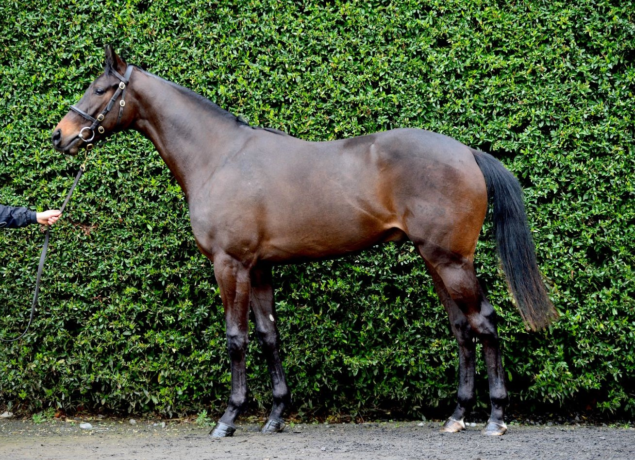 Lot 76 Kingman ex Hasten