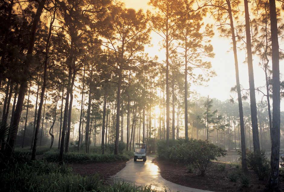 Grey Oaks golf path