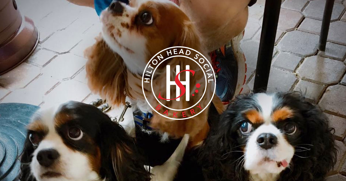 Bring your pet by Hilton Head Social Bakery for a free, healthy treat!