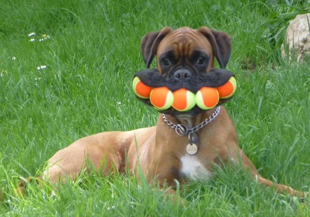 Too many balls! July 2017 | Saving Pets