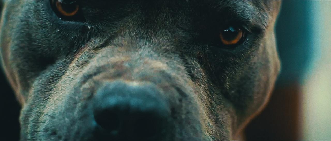 extreme close up of a pitbull dog