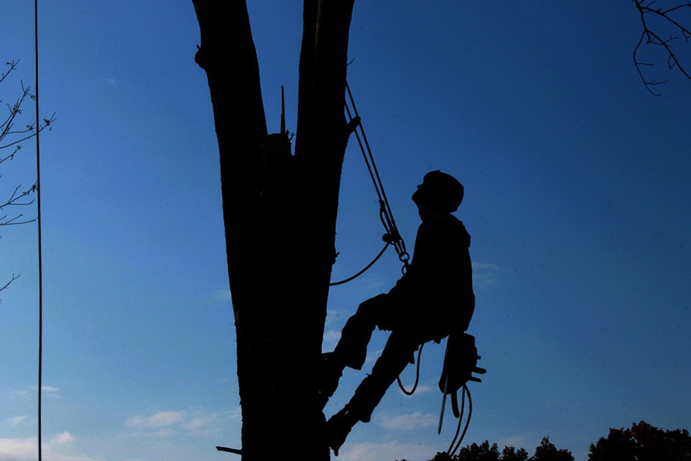 Reasons to Hire a Tree Service Company