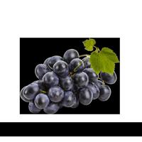 Plantio de Uva