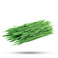 Plantio de Pasto