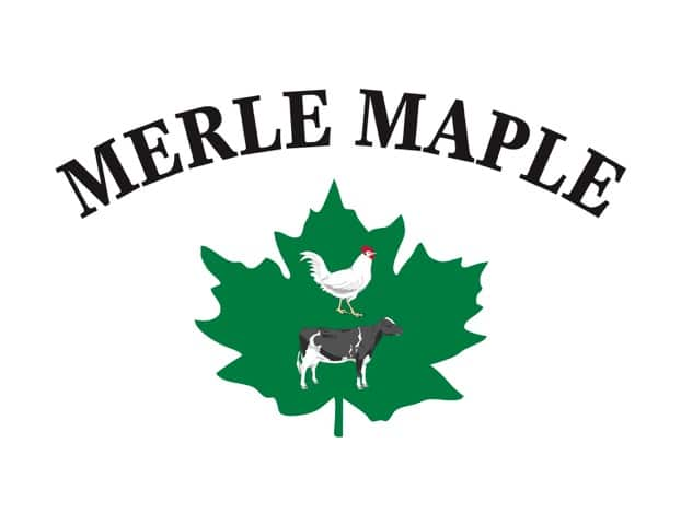 Merle Maple