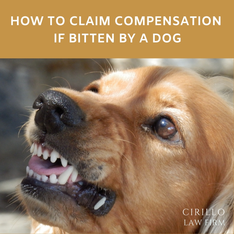 Dog Bite Personal Injury Claim
