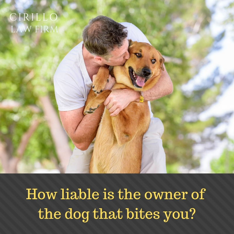Things you must know about the law governing dog bites
