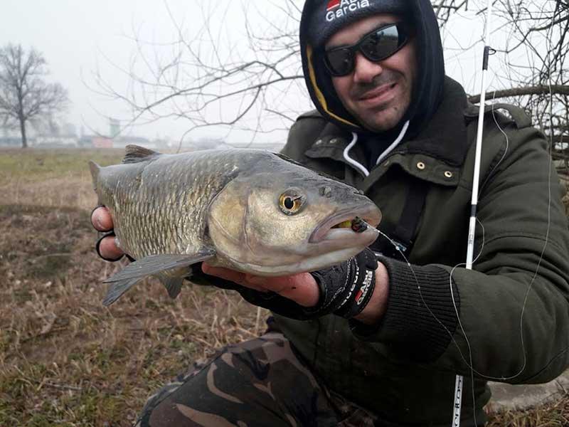 Fishing Chubs during winter time