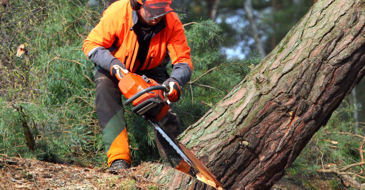 logger cutting down a tree close up