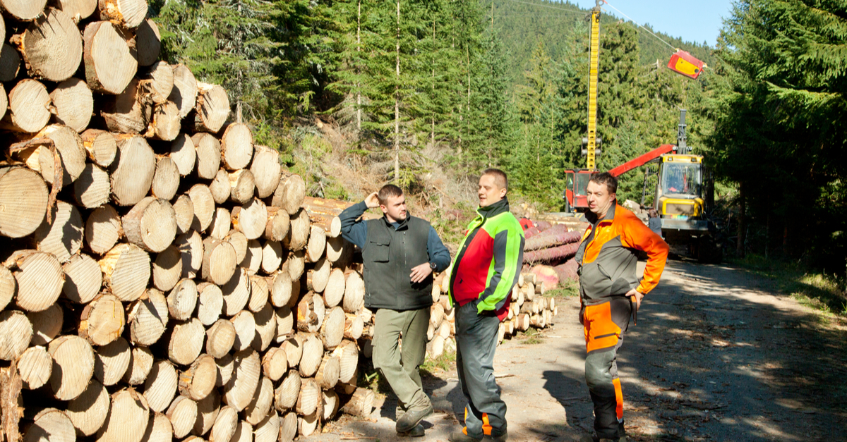 three workers standing in front of logs