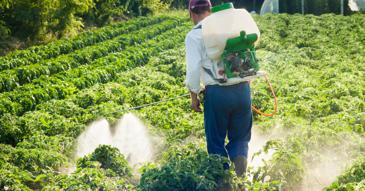 man spraying pesticides in a field